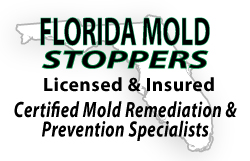 Certified Mold Remediation and Prevention Specialists
